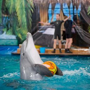 Дельфинарии, океанариумы Шебекино