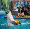 Дельфинарии, океанариумы в Шебекино