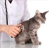 Ветеринарные клиники в Шебекино